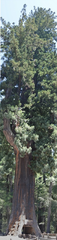 20130725_1880_tree_sm