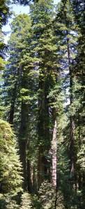 20130726_1919_trees_sm
