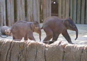 20131002_2590_elephants_sm