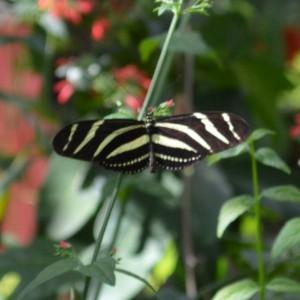 20140313_3468_butterfly