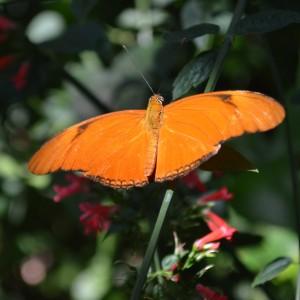20140313_3469_butterfly