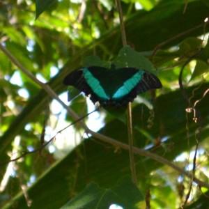 20140313_3470_butterfly