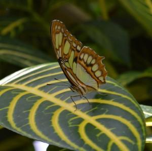 20140313_3490_butterfly