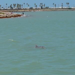 20140522_4124_dolphin