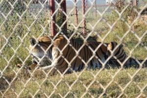 20141108_5100_TigerBox