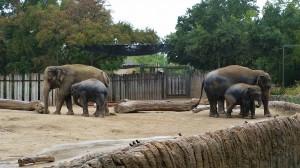 2015-10-22_elephants