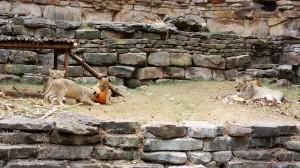2015-10-22_lions