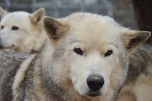 DSC_0094_wolf