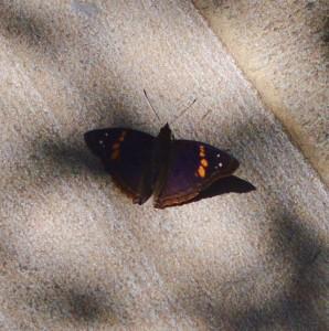 29_20170322_7605_butterfly