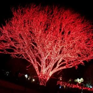 2017-12-24_193605_redtree